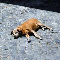 道で寝る犬
