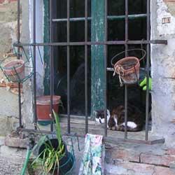 イタリア窓辺の猫