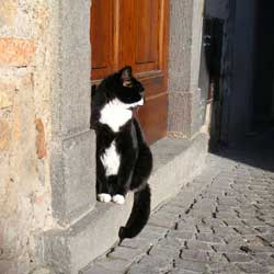 猫がひなたぼっこオルヴィエート