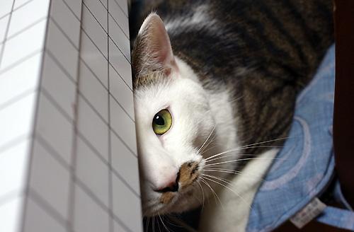cat_cibi.jpg