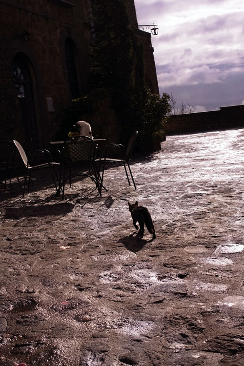 cats in italy