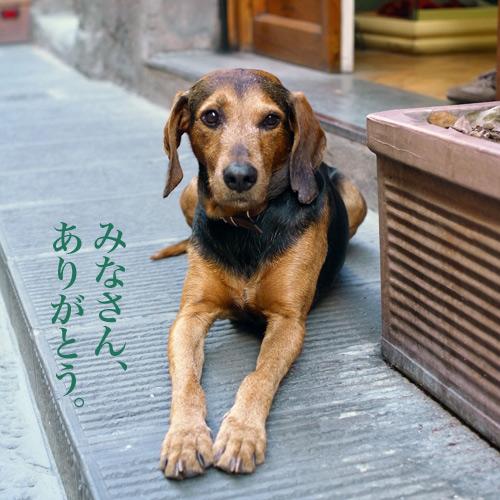 フィレンツェの犬