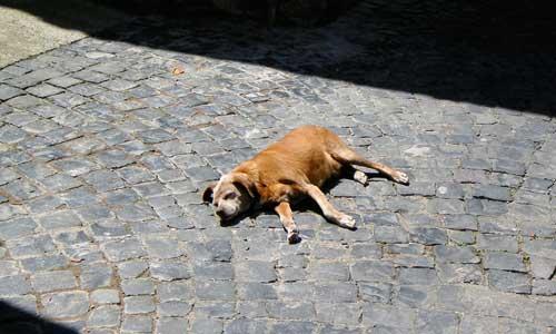 犬が道で横たわる