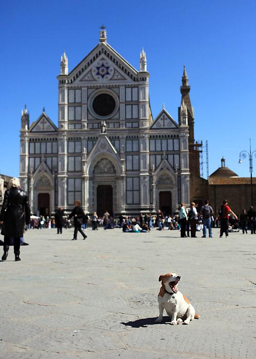 Firenze Santa Croce DOG