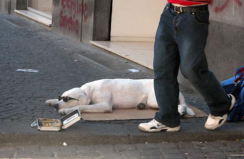 ナポリ路上の犬
