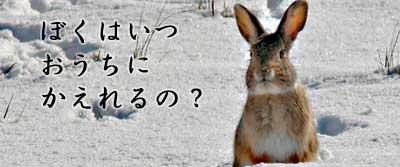 家に帰りたいウサギ