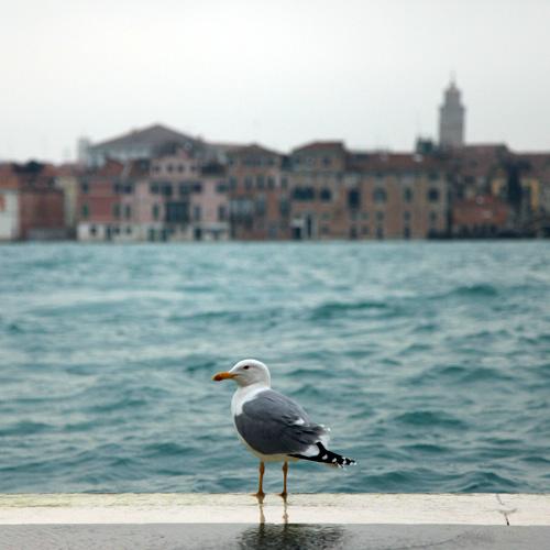 ヴェネツィアのカモメ