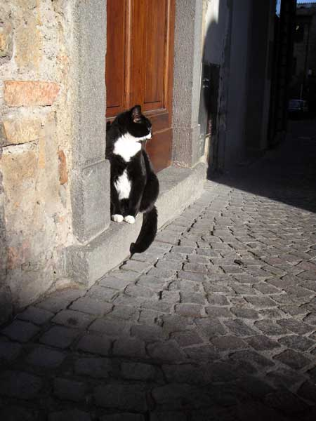オルヴィエートの猫
